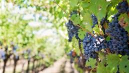 Experiencia Enoturistica en el Priorat - Wine Tourism Experience